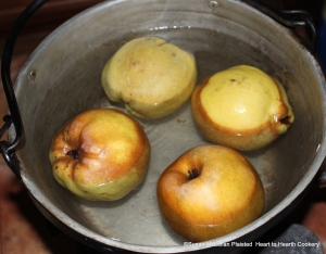"""To make the receipt (recipe) """"Quince Cream"""" first scald the quinces till soft."""