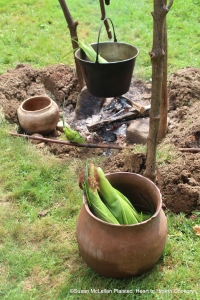 After the silks of the Puhwem (Lenape white flour corn) in the green or milk stage were harvested for drying, the green husks were carefully put back in place and tied with a piece of a corn leaf. In the foreground of the picture, two ears are soaking, one is tied and in the trade kettle boiling and one is tied and roasting supported by a roasting stick.